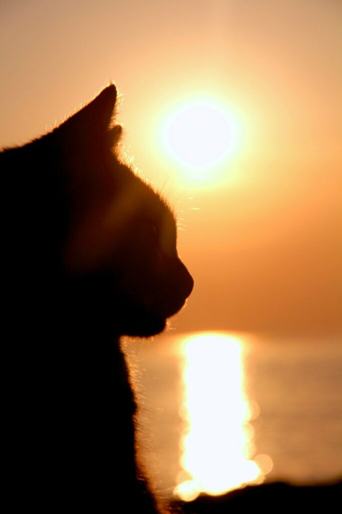 cat, silhouette, animal